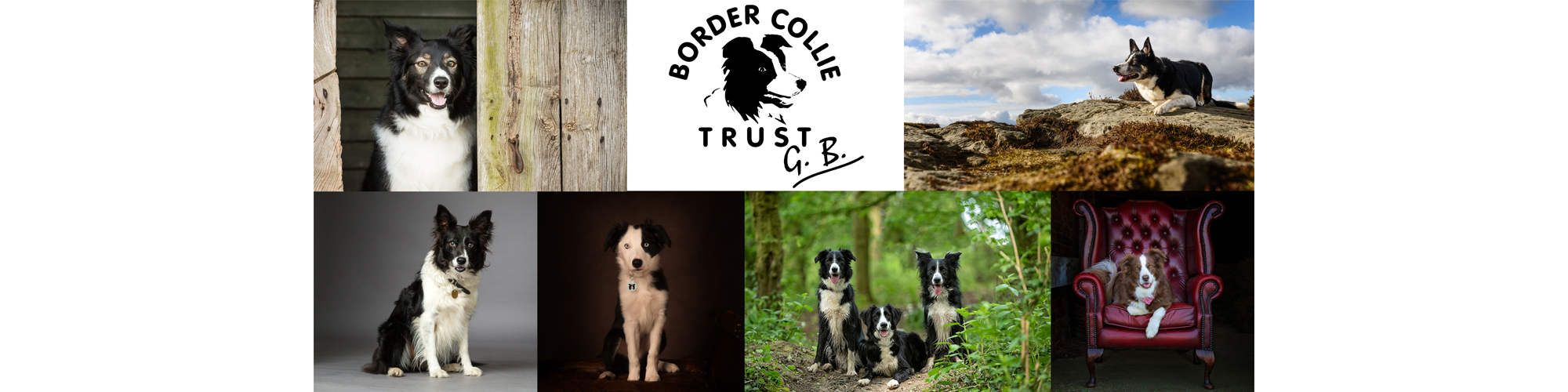 PICTURE YOUR BORDER COLLIE 2019