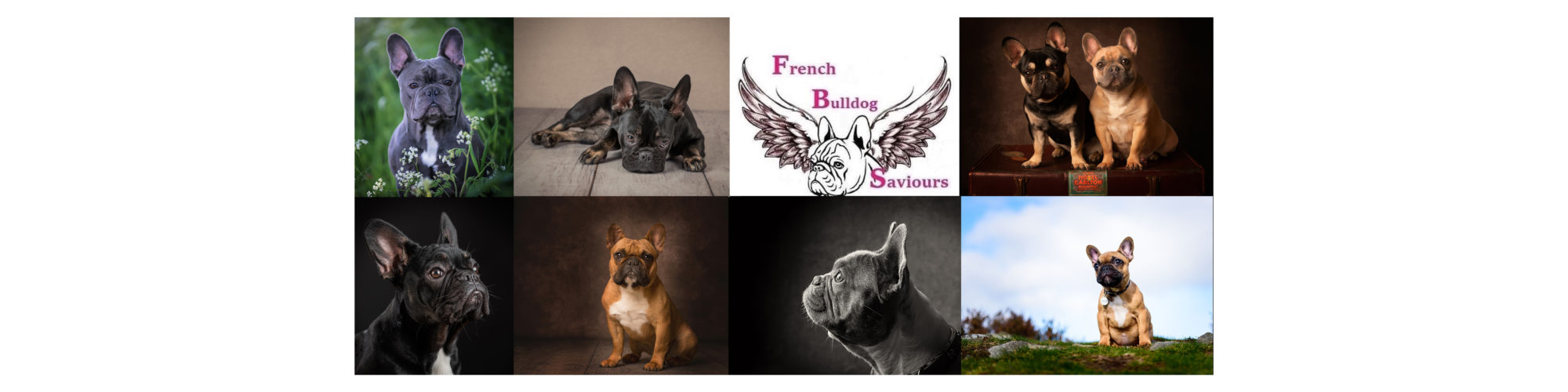 FUNDRAISING FOR FRENCH BULLDOG SAVIOURS